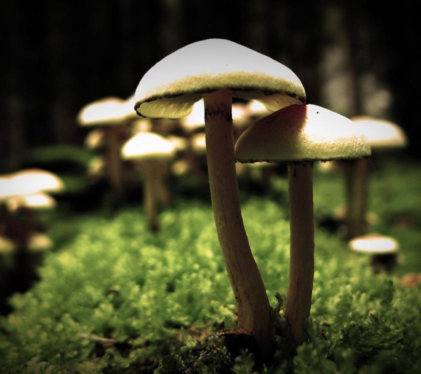 Image Credit -http://m.flikie.com/33569111/white-mushroom.html?skey=mushroom
